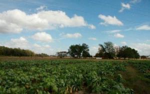 Leggett Farm