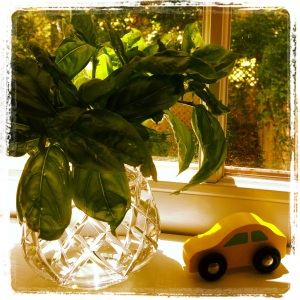 Basil and Toy Car Instagram