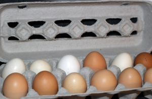 Leggett Farms fresh eggs II