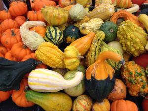 Pumpkin Goards